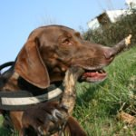 Jessika Dupont - Hundetrainerin in Lahr