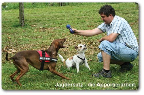 Jagdersatz-Arbeit für Hunde in der Hundeschule in Lahr