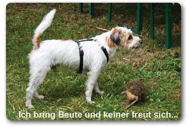 Jessika Dupont - Die Hundeschule in Lahr - Dogs and Places - Jagdtrieb